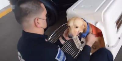 Así honra la policía de Sonora a perrito que se va a disfrutar de su jubilación