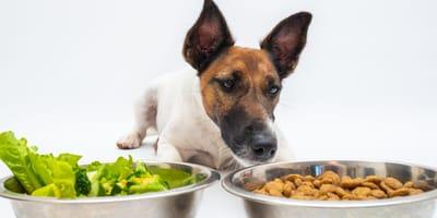 perro mirando plato pienso plato verdura