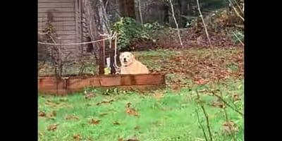 Cane scava nell'orto: la curiosa sorpresa per la famiglia! (Video)