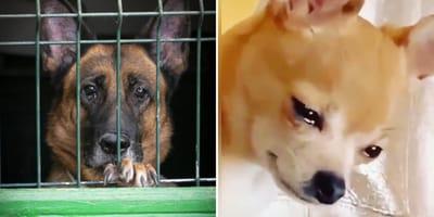 perros tristes