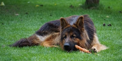 I migliori snack per cani in base alle loro esigenze