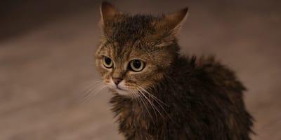 Gatito rescatado se cuela en el lavabo y el corazón de su humano se derrite de ternura