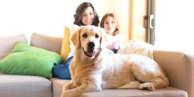 Guarda la TV con il suo cane: qualcosa lo attrae sullo schermo (Video)