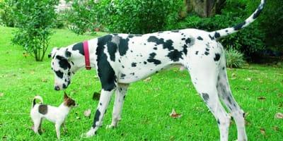 La taglia del cane incide sulla sua intelligenza? (Video)