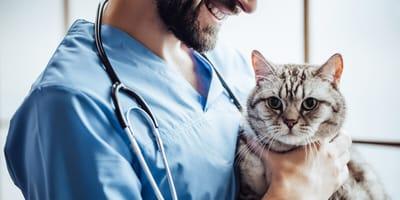 Kiedy przeprowadzić zabieg sterylizacji u kota?