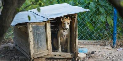 Sąsiedzi zgłaszają okrucieństwo mężczyzny wobec psa: ich pomyłka mogła skończyć się tragicznie