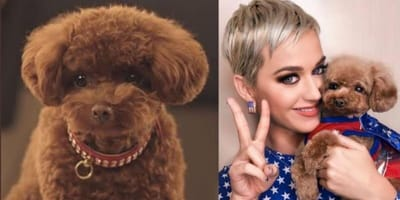 Katy Perry sparks huge online row after revealing she's turning her dog vegan