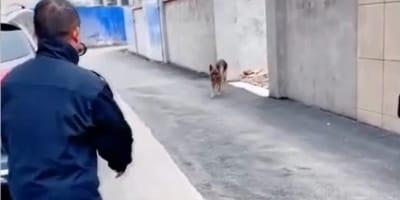Polizeihündin sieht Hundeführer nach 2 Jahren wieder und rührt die Welt zu Tränen