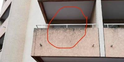 Gattino bloccato sul balcone chiede aiuto: la scena è sconcertante