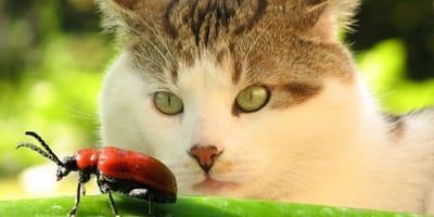 Perché il gatto mangia insetti quando caccia? È rischioso?