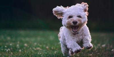 Estas fueron las razas de perro más populares en Instagram en 2020