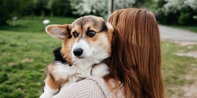 Día Internacional del Abrazo: ¿los perros odian los abrazos o les encantan?