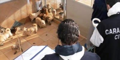 Cani e guardie zoofile