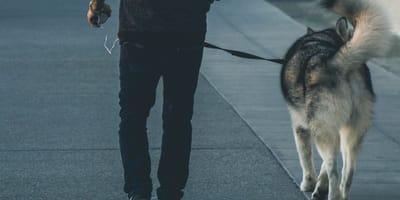 Uscire con il cane in zona rossa e arancione: è permesso?