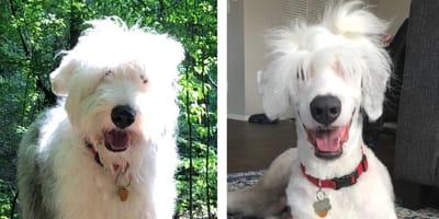 10 psów, których opiekunowie nie rozpoznali po wizycie u fryzjera