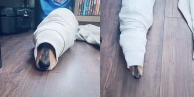 Dog's hilarious new habit is leaving him a bit stuck