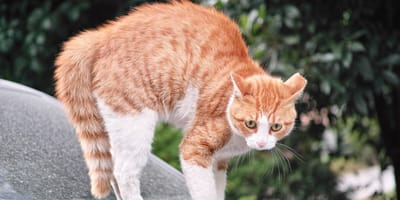 Jak uspokoić kota? Sposoby na koci stres