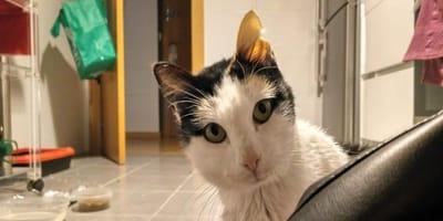 Cantina, África y Kit Kat, tres gatitos adultos por los que nadie jamás preguntó