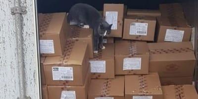 Kätzchen schleicht in Süßigkeiten-Container: 3 Wochen später sind alle fassungslos!