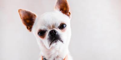 Come rieducare un cane che morde?