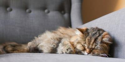 Gatos mayores: guía de cuidados especiales para la vejez