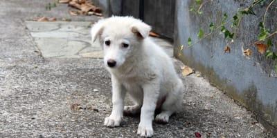 Mujer de Aguascalientes sale con sus perros: lo que encuentran en su paseo es simplemente estremecedor