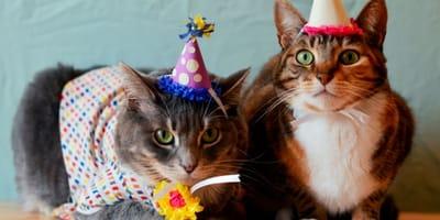 Festeggiano il compleanno del gatto e si contagiano in 15
