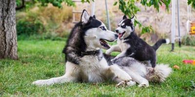 I 6 motivi più frequenti per cui il cane cambia carattere