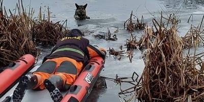 Owczarek niemiecki utknął na zamarzającym jeziorze: dramatyczna akcja ratunkowa strażaków