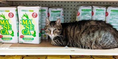 Kot_w_sklepie