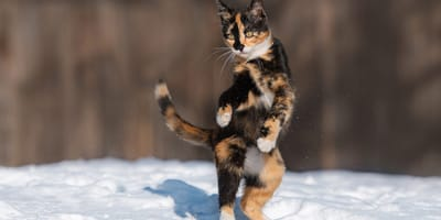 Kot po raz pierwszy widzi śnieg i rozśmiesza 30.000 osób