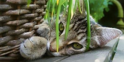 Cosa fare in caso di intossicazione alimentare del gatto?