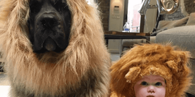 WATCH: Baby cuddles giant-sized teddy bear, but discovers it's not a toy at all