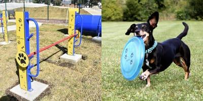 ¡Un lugar para que los perros hagan ejercicio! Inauguran el primer parque perruno en Iztapalapa