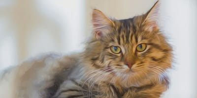 gatto famoso in primo piano