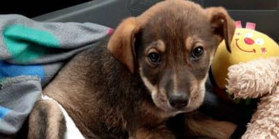 Benevento: cucciolo salvato dai volontari, adesso cerca casa