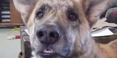 La reacción del perro cuando le dan una desastrosa noticia (Video)