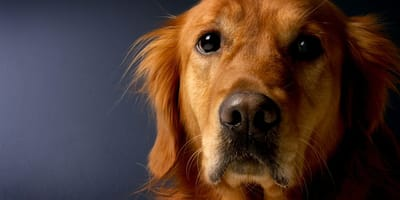 Está viendo la tele con su perro: cuando lo ve levantarse corre de inmediato por su teléfono