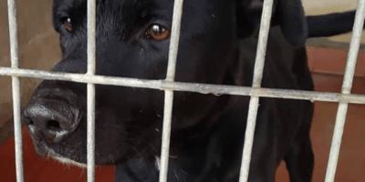 Martita de Graná se deja la piel para salvar la vida de este perrito: ¡ojalá lo consiga!