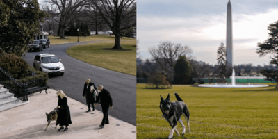 german shepherds in the white house