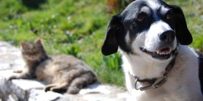 Gli esperti avvisano: vaccini anti Covid anche per cani e gatti