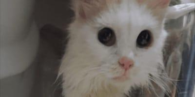 Parecía imposible que esta gatita miedosa se adaptara: no te imaginas cómo se ve hoy