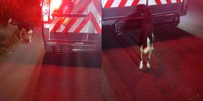 Tarzán se niega a separarse de la ambulancia donde se llevan a su humano