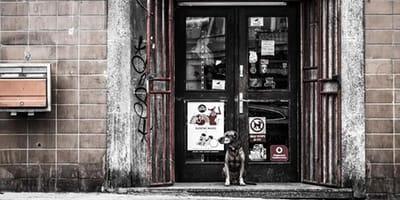 Hund wartet jeden Tag vorm Krankenhaus: Seine Geschichte lässt niemanden kalt