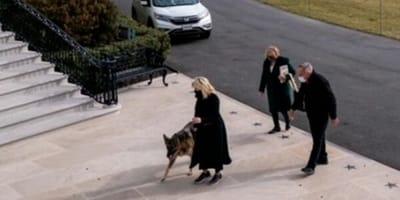 Champ e Major, i due Pastori di Biden, arrivano alla Casa Bianca