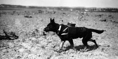 Giornata della Memoria: l'orrore vissuto dagli animali