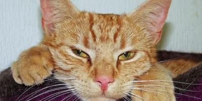 Lockdown e gatti: gli effetti della mancanza di libertà