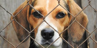 RSPCA warn of dog welfare crisis as nearly 6,000 dogs abandoned in 10 months