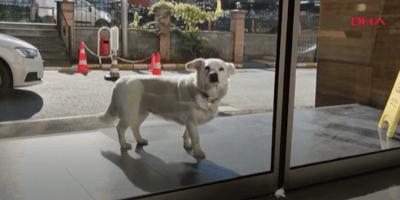 Este perro va todos los días al hospital y la razón conmociona a todos
