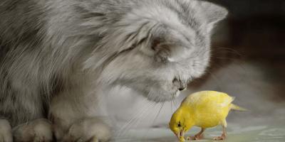 Gato y pájaro: consejos y precauciones para una convivencia perfecta